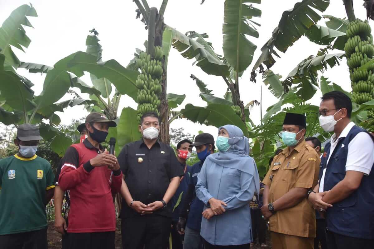 Gubernur Jawa Timur, Khofifah Indar Parawansa saat meninjau langsung pembibitan Pisang Mulyo Dampit pada Selasa Sore (16/03/2021).